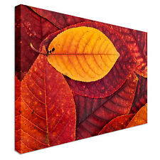 Autumn Leaves Colors Canvas Wall Art prints high quality