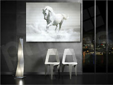 Galloping White Horse Giclee Art Canvas Fine Print Home Wall Decor