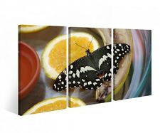 Canvas 3 pc Butterfly Flower Orange Fruit Animal Print Pictures Wall 9B351