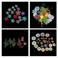 Mixed Real Pressed Flowers Leaves Natural Dried Organic DIY Floral Decor Art
