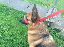 Halti Head Collar, All In 1 Training Lead