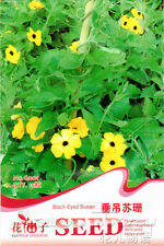 6 Kinds Hanging Flower Seeds Beautiful Potted Popular Lovely Optional Sell Well