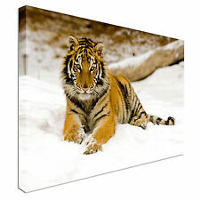 Beautiful Lazy Tiger in Snow Canvas Wall Art Print Large + Any Size