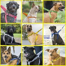 Strong Nylon Large Non-Pull Dog Harness+ Short Standard Extra Long Leads Or Sets