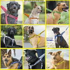 Strong As Leather Adjustable Non-Pull Dog Harness+2 Foot 4 Foot 6 Foot Lead/Sets