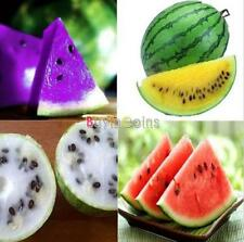 DIY Fruit Rare Sweet Watermelon/Strawberry / Dragon /KIWI Fruit Seeds Garden