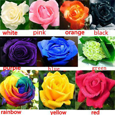 100X Multi-colors Flower Plant  Seeds Holland Rose Seeds Lover Gift Garden Decor