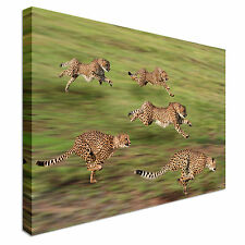 Female Cheetah Hunting Canvas Art Cheap Wall Print Home Interior