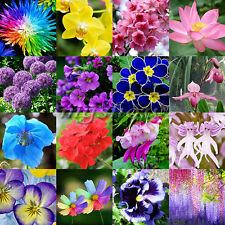 20-500Pcs Rare Multi-Colors Peony Flower Seeds Home Garden Plants Decor New