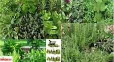 "6 Live 2-4"" inch Multiple Variety of HERBS Seedlings PRE ORDER Ships April 15"