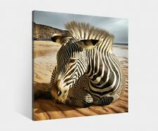 Canvas 1Tlg bis100cm Zebra Desert Animal Photo Print Mural Pictures Africa 9K870