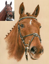 HORSE PORTRAIT. Pastel painting / drawing from photograph by professional artist