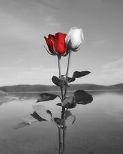 Black White Red Photography Artwork, Red Rose Flowers, Lake Landscape, Red Art