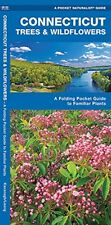 CONNECTICUT TREES WILDFLOWERS A FOLDING POCKET GUIDE TO FAMILIAR By Press NEW