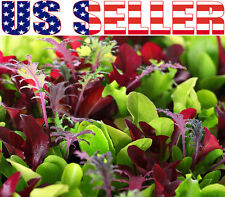 500+ ORGANIC Microgreens Mix 40 Varieties Superfood Heirloom NON-GMO Sprouting