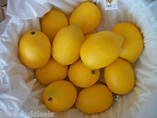 "Artificial Lemons 8 or 16 Realistic Decorative Faux Fake Large 3"", Staging Fruit"