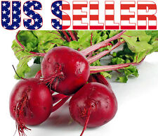 50+ ORGANICALLY GROWN Detroit Dark Red Beet Seeds Heirloom NON-GMO Early Sweet