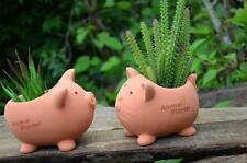 New Small Cute Pottery Container Succulent Herb Cat Pig Plant  Decor Pot