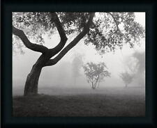 Into the Mist by Monte Photography Landscape Framed Art Print Wall Décor Picture