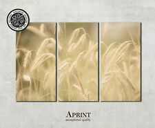 Wall Art Canvas Picture Print - Cornfield - ready to hang 3 panel canvas art