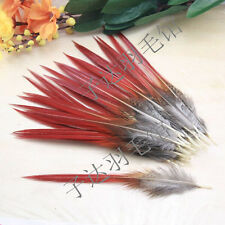 Wholesale!10-1000pcs beautiful Natural pheasant tail feathers 15-20 cm/6-8 inch