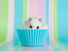 STEALTHY HAMSTER Cute Small Animal Gigantic Print POSTER