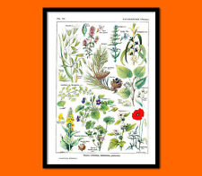 Vintage Botanical Affiche Calming Plants Larousse 1912 -  Botanical Wall Art Kit