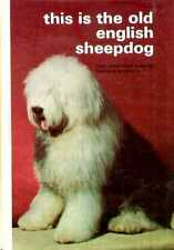 THIS IS THE OLD ENGLISH SHEEPDOG