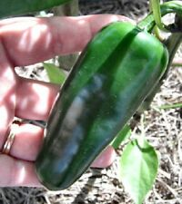 25-50-100-200 Giant Jalapeno Spicy Pepper Seeds - Buy Any 3 Get 1 FREE