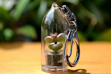 Live Plant Terrarium Keychains of Cacti & Succulent. Keychain Accessory