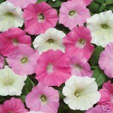 SHOCK WAVE PETUNIA SEEDS NEWEST OF THE WAVES A MUST HAVE! 20 SEEDS
