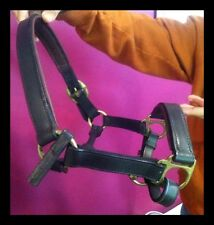 Leather Padded Horse Halter with Brass Fittings