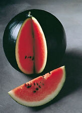 SUGAR BABY WATERMELON SEED JUST THE RIGHT SIZE AND OH SO SWEET PICK YOUR PACKAGE
