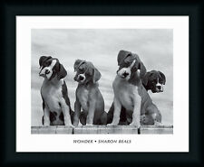 Wonder by Sharon Beals Beagle Dogs 20x16 Framed Art Print Picture