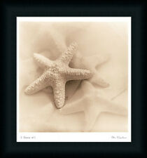 Il Oceano No. 1 by Alan Blaustein Starfish Seashell Art Print Framed