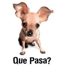 Funny Fitted Shirt Que Pasa? Chihuahua Face Mexico Dog Puppy Canine Attitude
