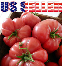 30+ GIANT Mortgage Lifter Tomato Seeds Heirloom Up to 2lbs Delicious RARE Red