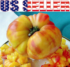 30+ GIANT Old German Tomato Heirloom NON-GMO RARE INDETERMINATE Rich Flavor USA