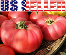 50+ GIANT German Johnson Tomato Heirloom NON-GMO Indeterminate Productive