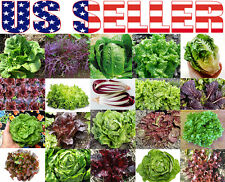 300+ ORGANIC Lettuce Mix 20 Varieties Heirloom NON-GMO Rare For Salad Easy Grow