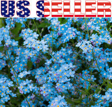 200+ Forget Me Not Indigo Blue Flower Seeds Ground Cover Bedding Forget-Me-Not