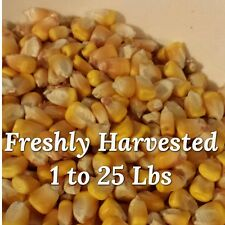 Fresh Harvested Whole Dried Corn - Cooling Pads or Cool Packs Great for Crafts