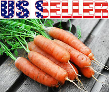 200+ ORGANIC Little Fingers Baby Carrot Seeds Heirloom NON-GMO Sweet Crisp Juicy