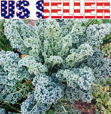 200+ ORGANIC Kale Dwarf Blue Curled Vates Seeds Heirloom NON-GMOTasty Rare