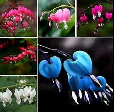 10PCS Beautiful Perennial Herbs Dicentra Spectabilis Flower Plant Bleeding Seeds