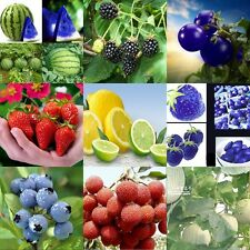 Home Garden Delicious Nutritious Seeds Various Fruit Seed Vegetables Plant