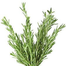 #1 Rosemary Essential Oil (Rosmarinus officinalis) MSGC CERTIFIED PURE ORGANIC