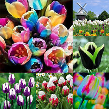 7~14Pcs Beauty Rare Rainbow Tulip Flower Bulbs Seeds Perennials Spring Bloom New
