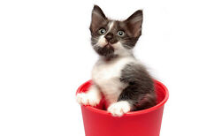 Cute Kitten In A Red Cup - Animal Poster Art Print - Cat Photo - Cat Poster Art