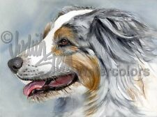 BLUE MERLE AUSSIE Australian Shepherd Dog Art Print Watercolor Painting Signed